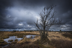 Brackvenn III (Tony N.) Tags: belgique belgium hautesfagnes fagnes lige brackvenn tree arbre dead mort tourbe peat eifel parcnatureleifel d810 nikkor1635f4 vanguard tonyn tonynunkovics