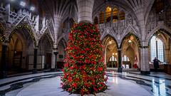 Christmas in Centre Block : December 4, 2016 (jpeltzer) Tags: ottawa parliament parliamenthill centreblock christmaslights christmas rotunda