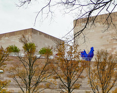 2016.11.30 DC People and Places with a Sony A7sII 09031 (tedeytan) Tags: dc sonya7sii washington dcist nationalgalleryofart exif:model=ilce7sm2 exif:isospeed=320 camera:make=sony exif:aperture=40 exif:lens=fe2470mmf4zaoss exif:make=sony camera:model=ilce7sm2 exif:focallength=70mm