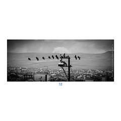 ETR PHOTOGRAPHY  ERSİN TÜRK - ETR0014 (ETR   Ersin Türk) Tags: ersintürk ersintürkfotoğraf etr etrfotograf blackandwhite siyahbeyaz landscape manzara bird tel mart 2013 eskişehir turkey monochrome cinemascope