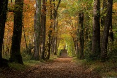 Autumn - (jymandu) Tags: bois forêt nature automne