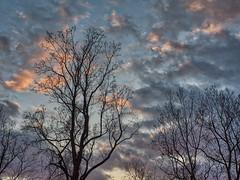 PB270044_Aurora2017_HDR (susandmanners) Tags: sunset fallsunset hdrsunset