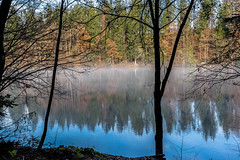 A hazy Day (*Capture the Moment*) Tags: 2016 autumn bavaria bayern bume deutschland dunst fog germany hackensee herbst himmel lakehackensee landschaften nebel reflection reflections reflexion sky sonya7m2 sonya7mii sonya7mark2 sonya7ii sonyfe2470mmf4zaoss spiegelung trees wetter haze