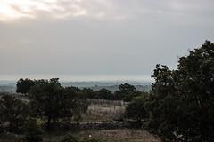 Misty dawn, Cassano delle Murge (Puglia) (f.bigslave) Tags: italy italia puglia apulia bari cassano delle murge miulli mist dawn early morning olive trees fields countryside