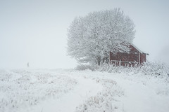 Heavy snowfall (Helena Normark) Tags: redshed shed snow snowfall winter whiteout ust ustsen heimdal srtrndelag norway norge sonyalpha7ii a7ii voigtlnder cv5015 nokton5015 nokton50mmf15