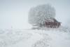 Heavy snowfall (Helena Normark) Tags: redshed shed snow snowfall winter whiteout ust uståsen heimdal sørtrøndelag norway norge sonyalpha7ii a7ii voigtländer cv5015 nokton5015 nokton50mmf15