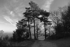 Temple of the Winds. (shurst2011) Tags: templeofthewinds blackdown southdownsnationalpark westsussex uk england december winter monochrome bw blackandwhite hill vantagepoint walk ramble tree trees pine sky cloud canon70d 1585mm gimp 280meters high horizon