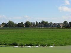 IMG_0042 (Momo1435) Tags: nederland groene hart alphen meije aarlanderveen ter aar