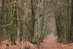 (nettisrb) Tags: wald wood forrest waldweg weg path bume tree trees allee natur naturerlebnis herbst autumn fall germany deutschland