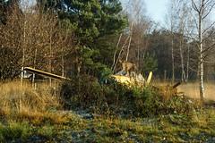 Eens kijken of ik mee mag..... (limburgs_heksje) Tags: nederland niederlande netherlands noord brabant beekse bergen safaripark dierenpark