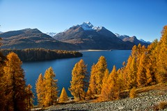 Switzerland (Marcel Cavelti) Tags: bq0a9232bearb autumn switzerland grisons engadin silsersee lake mountain swiss alps larch landscape outdoor explore