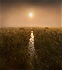 The Water of life (adrians_art) Tags: horses water weather misty sunrise reflections foggy wetlands streams brooks marshlands equines