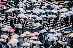 A Sea of Umbreallas (lestaylorphoto) Tags: road street camera travel motion wet rain japan photoshop photography tokyo movement nikon crossing shibuya    crosswalk 70300mm umbrellas gaijin  shibuyacrossing topaz  lightroom  adjust         d7000