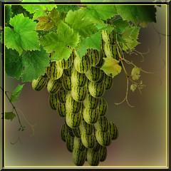 Watergrape (jaci XIII) Tags: melancia uva grape photochimera watermwlon photobicho