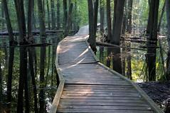 The Arboretum swampwalk (@klawrenc) Tags: summer guelph arboretum swamp boardwalk universityofguelph thearboretum guelphontario wildgoosewoods