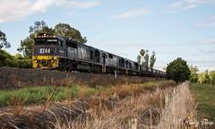 Up Werris Creek (Henry's Railway Gallery) Tags: train pacific railway loco trains national locomotive coal railways pn locomotives locos emd 8205 pacificnational werriscreek quirindi 8241 8244 freightcorp rpaunsw82class rpaunsw82class8244 railpage:class=51 railpage:loco=8244 railpage:livery=89
