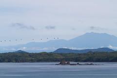 130722-090200 (airbreather) Tags: mountain bird animal volcano pelican baru