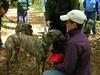 GreatBrookFarmMay92010012