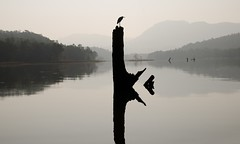 Heron's mirror (nandadevieast) Tags: travel india heron satpuranationalpark anuragagnihotri nandadevieast satpuratigerreserve dp2m dp2merrill sigmadp2merrill sigmadp2m dpmerrill riverdenwa