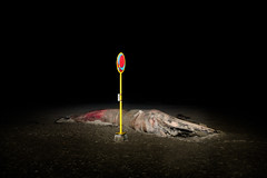 (Peter de Krom) Tags: sea beach night ball dead flash pole whale sgravenzande