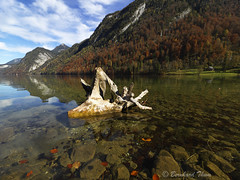 Autumnal impressions of Knigssee N6 (Bernhard_Thum) Tags: autumn mountains alps fall nature landscape berchtesgaden herbst natur berge alpen landschaft shining bernhard tistheseason fallcolours knigssee herbstfarben watzmann thum autumnalcolours berchtesgadenerland rockpaper greenscene elitephotography landscapesdreams alemdagqualityonlyclub capturenature daarklands pastfeaturedwinner pinnaclephotography bernhardthum vision:mountain=0804 vision:outdoor=0692 vision:plant=0561 vision:sky=0692