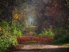 an autumn alley (JoannaRB2009) Tags: road park autumn trees sun fall nature sunshine alley path poland polska sunny natura avenue droga aleja soce jesie przyroda drzewa nieborw cieka