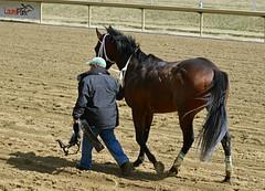 2013-03-27 (86) r5 #4 Press One (JLeeFleenor) Tags: photos photography marylandracing md marylandhorseracing laurelpark horses thoroughbreds equine equestrian cheval cavalo cavallo cavall caballo pferd paard perd hevonen hest hestur cal kon konj beygir capall ceffyl cuddy yarraman faras alogo soos kuda uma pfeerd koin حصان кон 马 häst άλογο סוס घोड़ा 馬 koń лошадь bay maryland