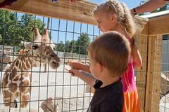 DSC_4039 (150hp) Tags: family boy cute girl happy nikon toddler d70s sydney young carrots giraffe feed xavier nikkor 1870mm