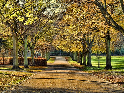 An Autumn Morning in the Park