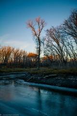 Thin Ice, Seine River. Winnipeg, Manitoba, Canada (josephvisser) Tags: trees winter sunlight snow canada fall ice nature river outdoors winnipeg dusk manitoba thinice