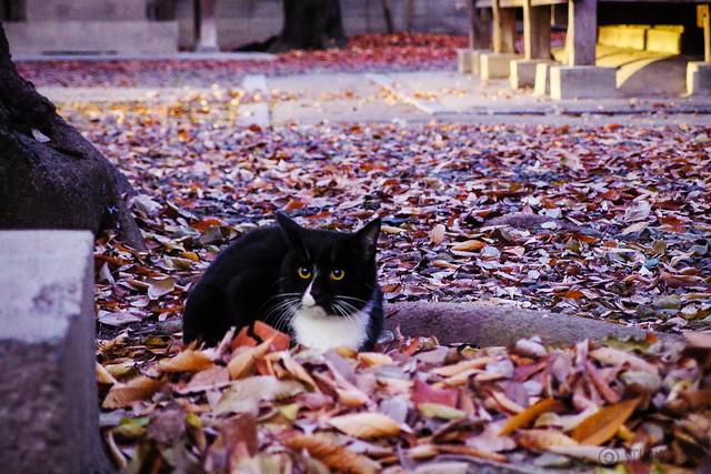 Today's Cat@2013-12-09