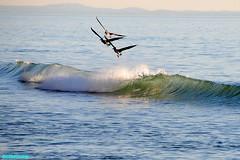 ZB2447 (mcshots) Tags: ocean california travel winter sea usa beach pelicans nature water birds coast wings surf waves stock tubes flight feathers socal breakers mcshots swells combers losangelescounty
