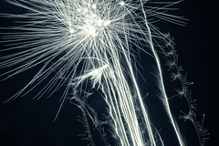 Fireflowers (Cornelli2010) Tags: longexposure light abstract art licht fireworks abstractart kunst newyearseve pyro silvester abstrakt feuerwerk langzeitbelichtung abstraktekunst canonef2470mm128l canoneos5dmarkiii