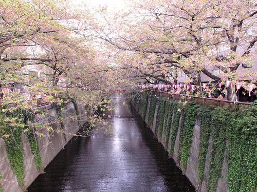 Sakura Meguro, Tokyo, Japon