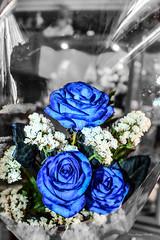 No se... son diferentes (Edwin.1997) Tags: blue roses de y para negro una alemania todo tu rosas ramo fondo regalo castillo carta edwin nada malo amazonas azules amada salazar verdecora mesnada acompaalo