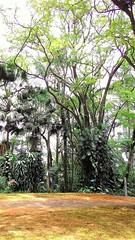 Galhos revoltos (Jos Argemiro) Tags: galhos ramos textura contraste parque jardim floresta ar areo ramification branches texture contrast park forest garden aerial air wood grove arvoredo mata bosque biodiversidade botnica botany biodiversity