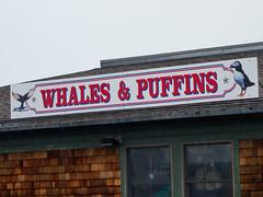 Whales & Puffins (keyphan06) Tags: newengland 2016 maine barharbor streetscenes