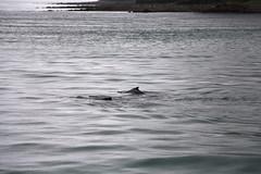 IMG_0330 (EliaZane) Tags: alaska glacier mendenhall sea ocean ice blue cruise