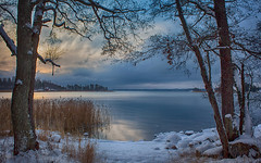 White shore (Joni Mansikka) Tags: winter nature sea shore snow outdoor landscape trees branches calm water clouds colours reed sauvo suomi finland canonef2880mmf3556
