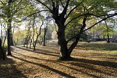 Afternoon Light (Joe Josephs: 2,861,655 views - thank you) Tags: centralpark nyc newyorkcity travel travelphotography urbanlandscapes urbanparks landscape landscapephotography outdoorphotography landsacapes
