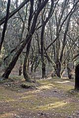 Parque Nacional de Garajonay - Laguna Grande (astroaxel) Tags: spanien kanarische inseln la gomera parque nacional de garajonay laguna grande