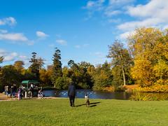 Walking towards the duck pond (Julia Livesey) Tags: autumn virginiawater englefieldgreen england unitedkingdom gb
