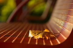 resting leaf (bjdewagenaar) Tags: leaf colors autumn dof grain perspective park bench minolta sunny sony a58 alpha raw lightroom