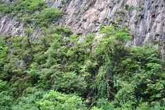 Vegetated cliffs, Wolong June 2016 (Aidehua2013) Tags: cliff rockface wolong wolongnationalnaturereserve sichuan china