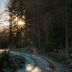 catch the light! (grahamrobb888) Tags: nikon nikond800 nikkor50mmf18 nikkor birnamwood forest frost cold perthshire scotland sunlight
