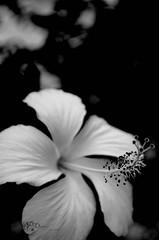 High hope (Danni Songida) Tags: photographyart photography pictures photooftheday picture beautiful blackwhite amazing art abstract nature natureshots macro macrodreams naturalwonderful award capture nikonphotography creative closeup wonderful love