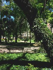 Praça Santos Andrade (Régis Cardoso) Tags: praça square santos andrade green nature city
