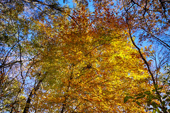 DSC09100-102_HDR (Capt Kodak) Tags: autumn chattahoocheerivernationalrecreationarea fall hdrefexpro2 madefrom3images medlockbridgepark nationalparkservice nikcollectionbygoogle niksoftware photomerge