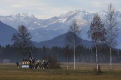 Leonhardiwagen (murnau_am_staffelsee) Tags: murnau bayern deutschland ger oberbayern leonhardifahrt landkreisgarmischpartenkirchen dasblaueland tradition alpen