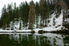 ... riflessi (antosti) Tags: veneto belluno cortinaampezzo lago aial neve pini larici inverno nikon d70s lake gebirgssee legname alberi